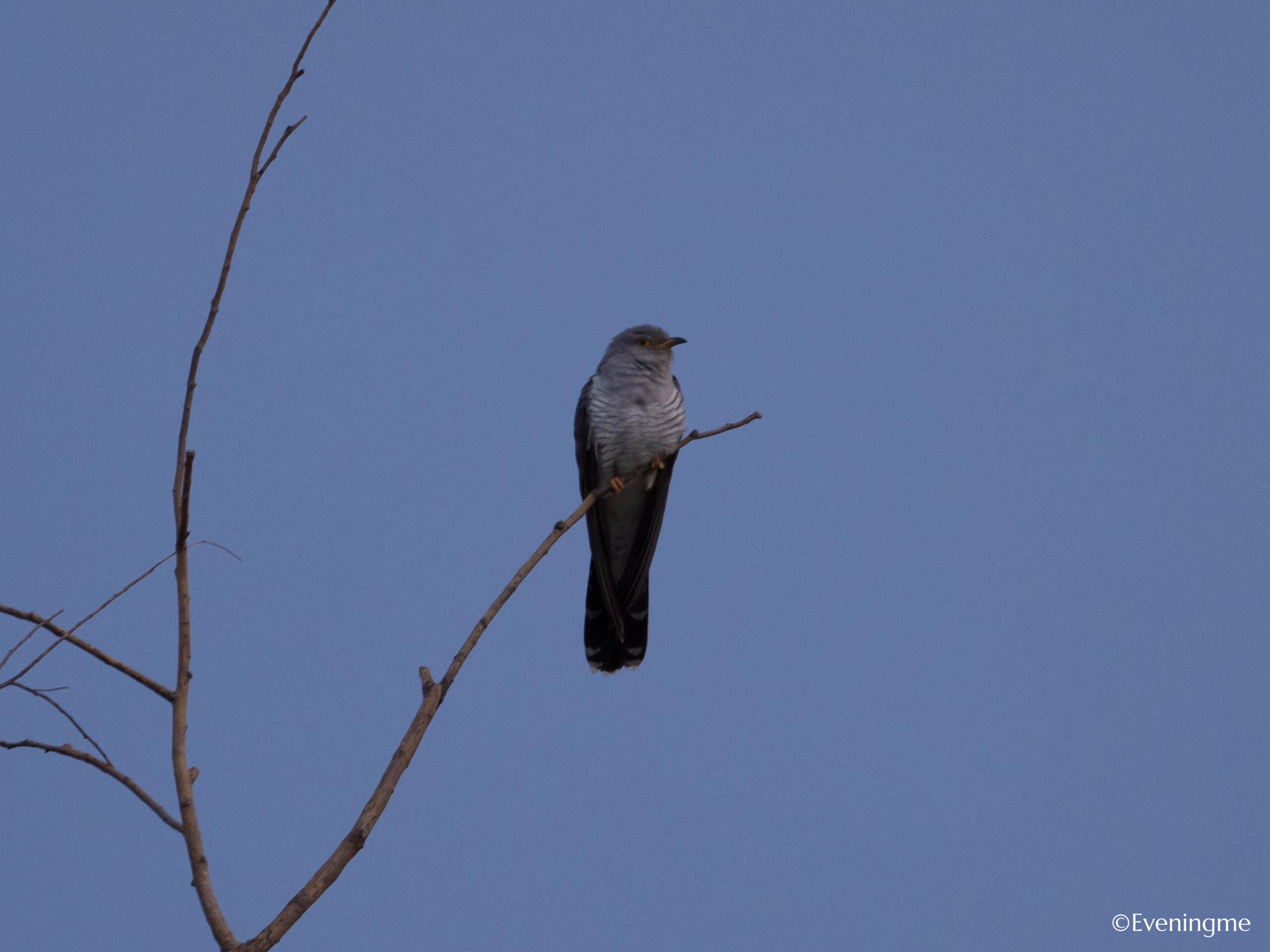 怎么得知一种鸟叫什么?吊诡的经历插图3