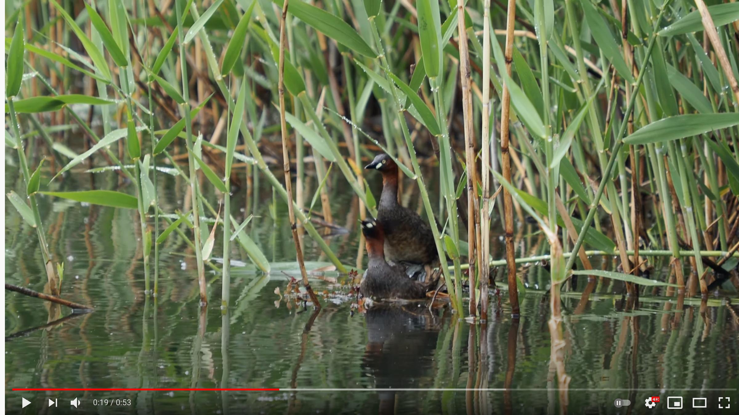 怎么得知一种鸟叫什么?吊诡的经历插图1